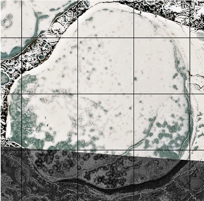 Figure 3: Top - Copernicus Sentinel-2 acquisition from central Yamal from winter 2017 (data source: ESA) and ALOS-2 PALSAR from winter 2008 (data source JAXA). The lakes are covered with ice and snow. Visible circular patterns can occur in Arctic lakes. (data preparation by b.geos)