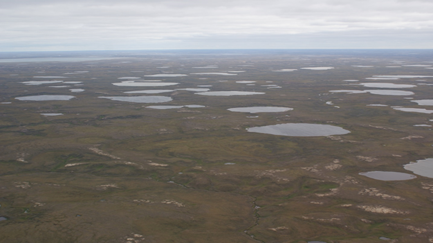 Figure 2: Lakes on central Yamal, Western Siberia, Russia (Photo: A. Bartsch 2016)